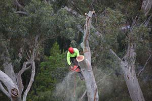 tree removal, tree pruning, stump grinding