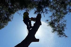 tree removal, tree pruning, stump grinding
